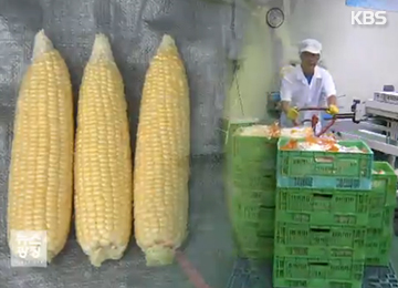 РК временно отменит импортные пошлины на кукурузу