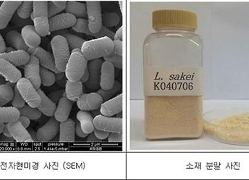 اكتشاف نوع جديد من البكتيريا في معجون فول الصويا التقليدي الكوري