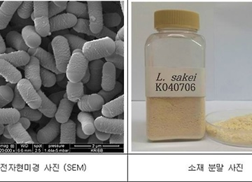 New Lactic Acid Bacterium Found in Doenjang