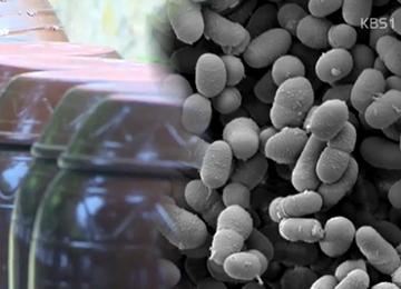 Milchsäurebakterien in koreanischer Sojabohnenpaste gefunden