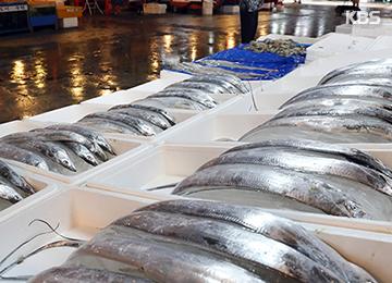 タチウオの漁獲量 猛暑で63%減