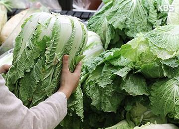 9월 농림수산 생산자물가 사상 최고···배추·무 30% 이상 급등