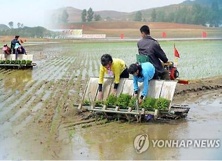 Bắc Triều Tiên đứng trước nguy cơ thiếu lương thực trầm trọng trong năm nay