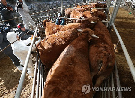 Gyeonggi to Administer O+A Type FMD Virus Vaccines
