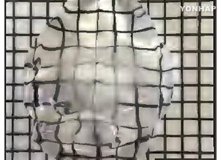 脳神経回路再現技術 韓国の研究グループが開発