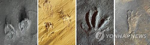 علماء يعثرون على حفريات لثدييات قافزة في كوريا الجنوبية