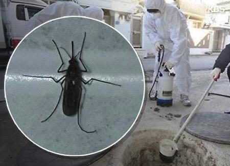갈수록 빨리지는 모기 활동…일본뇌염주의보도 벌써 발령