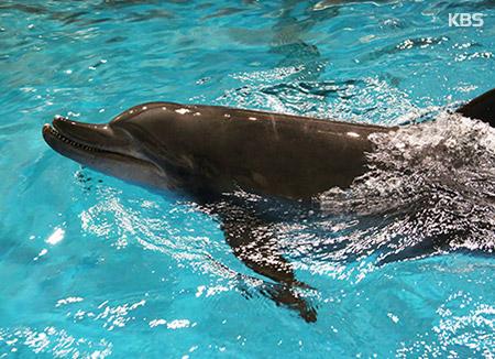 Deux dauphins vont retourner dans la mer