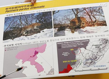حديقة سيول تسعى لإدخال الفهود الكورية المنقرضة