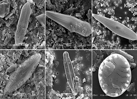 상주 습지에서 미기록 돌말류 6종 화석 발견