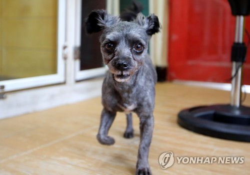 Abandoned Dog Finds New Home at Presidential Office
