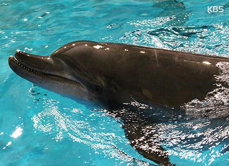 서울대공원 남방큰돌고래 두 마리 22일 제주바다로