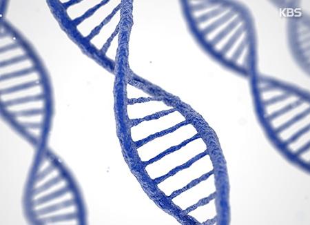 Une équipe sud-coréano-américaine réussit à corriger la mutation génétique d'embryons humains