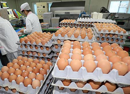 식약처, 유통 달걀 성분 검사 완료...20일까지 '부적합' 모두 폐기