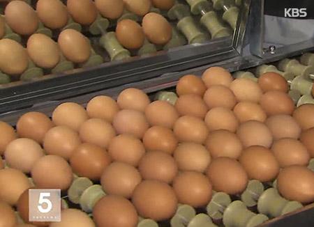 '살충제 달걀' 부적합 농가 최종 49곳...이력시스템 도입