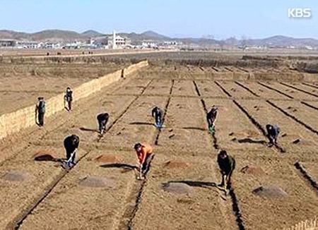 FAO Reports Drop in N. Korea's Rice Harvest