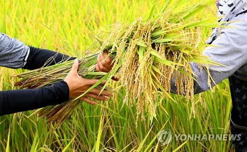 Отрасль рисоводства в РК сохранила прежние показатели