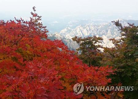 雪嶽山で紅葉始まる