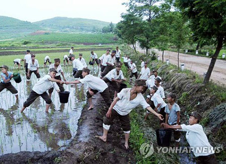 Selon la FAO, la Corée du Nord a besoin de 458 000 tonnes d'aide alimentaire extérieure