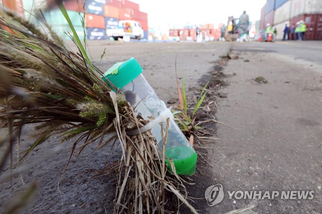 ヒアリの防疫進める 釜山港