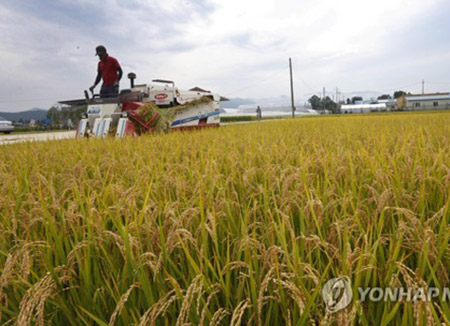Bumper Rice Harvest Expected Despite Drought