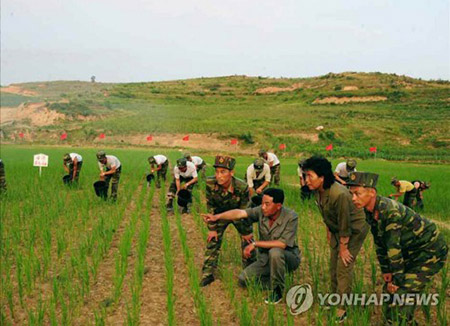 38 North:北韩今年或遭遇更严重粮食危机
