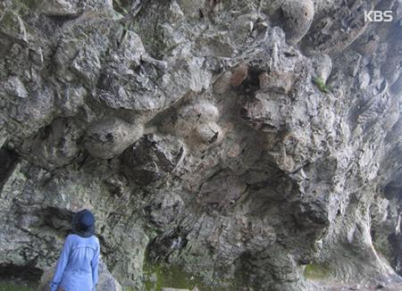 """담양 추월산 1억년전 화산활동 흔적…""""지질학적 가치 뛰어나"""""""