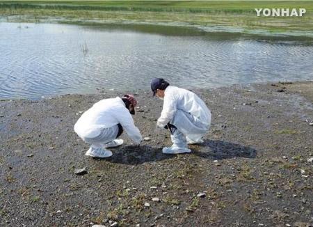 日本で高病原性鳥フル検出 国内防疫強化へ