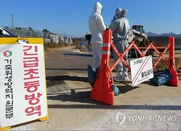 H5N6 Strain of AI Confirmed in Gochang