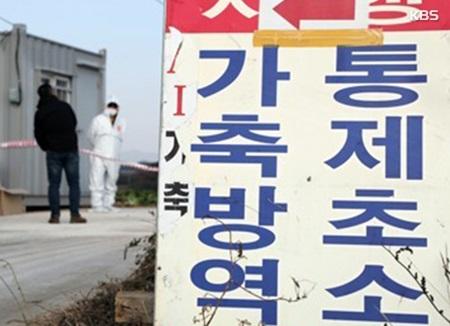 ظهور إنفلونزا الطيور في مزرعة للبط في كوريا
