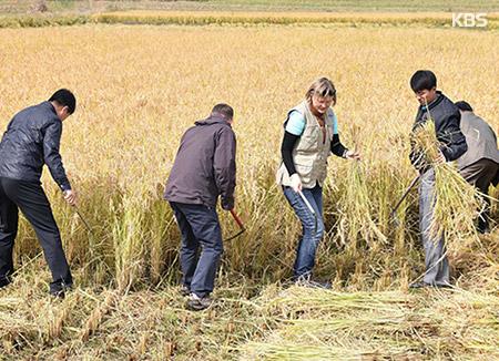 FAO: Reisernte in Nordkorea dieses Jahr um 300.000 Tonnen geschrumpft