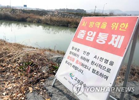 Daerah di Bagian Selatan Korea Membatalkan Berbagai Acara Akibat Flu Burung