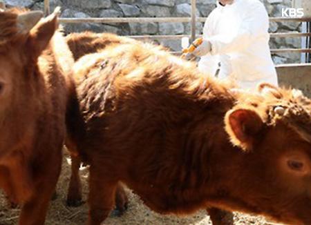 В РК увеличилось поголовье крупного рогатого скота
