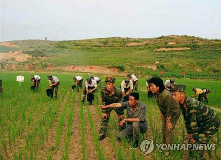 FAO Again Names N. Korea as Country Short of Food