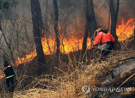 Половина осенних пожаров в лесах РК возникают по вине человека