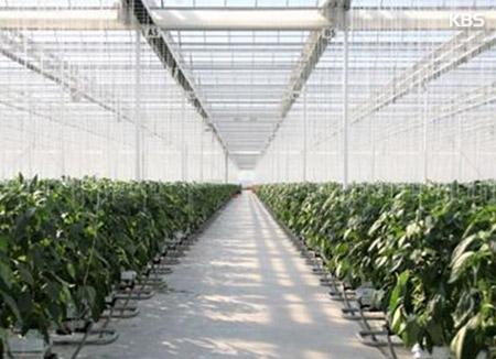 РК развивает экспортные сельскохозяйственные компании