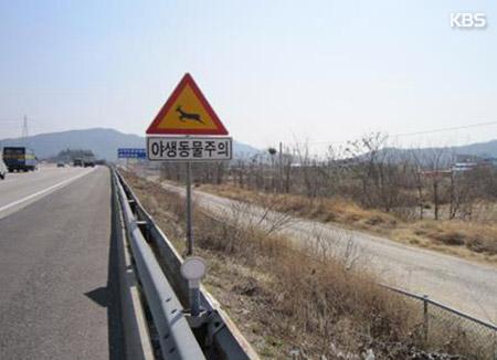 Aumenta el volumen de animales muertos en autopistas en mayo y junio