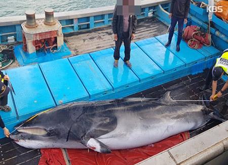 Südkorea verbietet auch Verkauf von gestrandeten und illegal gefangenen Walen