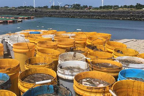 제주 해상 가두리양식장서 넙치 4만 5천 마리 폐사