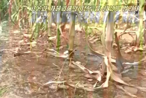 국제적십자사, 북한에 폭염대응 긴급 구호단 급파