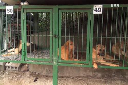 La Cheongwadae prête à revoir la loi pour exclure les chiens des animaux d'élevage