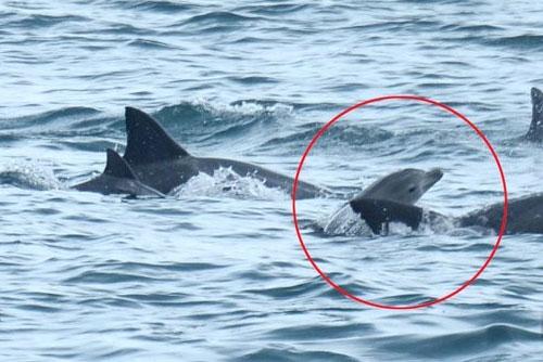 Delfin liberado en los mares de Jeju dio a luz