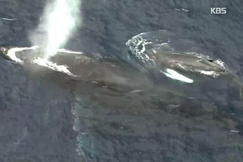 Japans Antrag für kommerziellen Walfang gescheitert