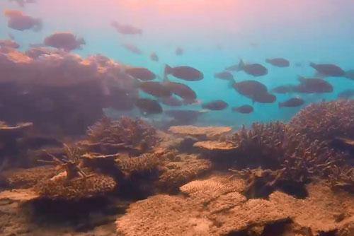 무심코 쓰는 '선크림', 산호 멸종 앞당긴다