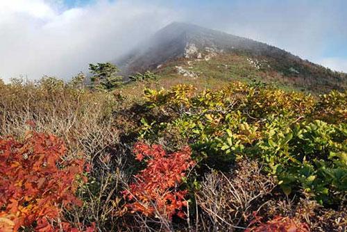 Musim Gugur Datang, Dedaunan di Gunung Soraksan Mulai Berubah Warna