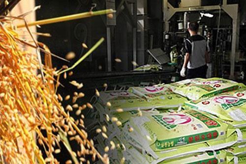 La production de riz recule cette année