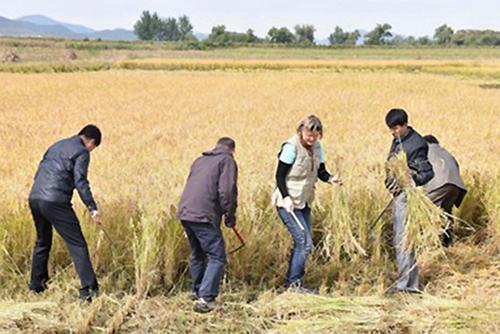FAO: Nordkorea fehlen 640.000 Tonnen Nahrungsmittel