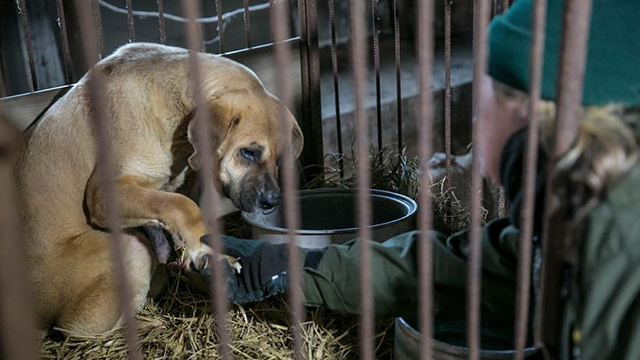 2 Dog Slaughterhouses in Dongdaemun Closed, Pressure to Continue