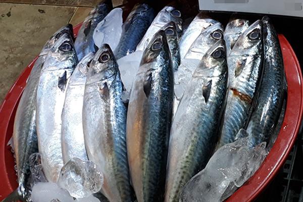 고등어는 역시 '국민 생선'…3년 연속 가장 좋아하는 수산물 1위