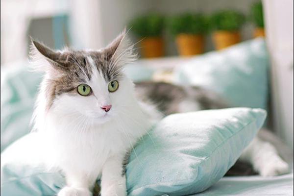 한국 반려동물 돌봄시장 1조 8천억 원…고양이용 간식 급증